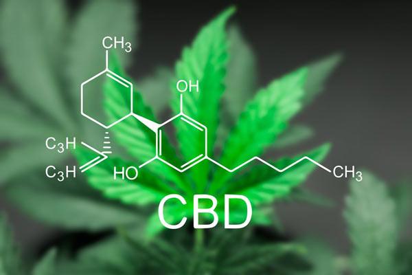 CBD - kannnabidol - działanie i właściwości