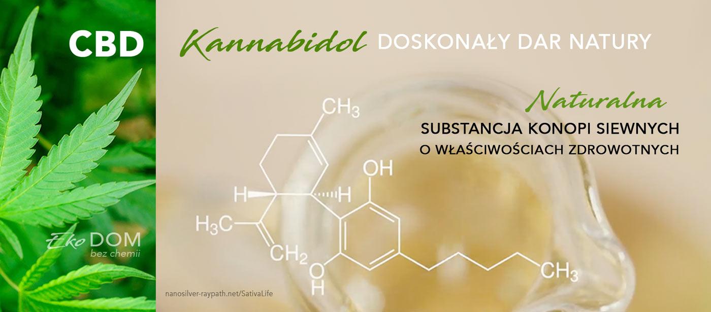 CBD kannnabidol - działanie i właściwości