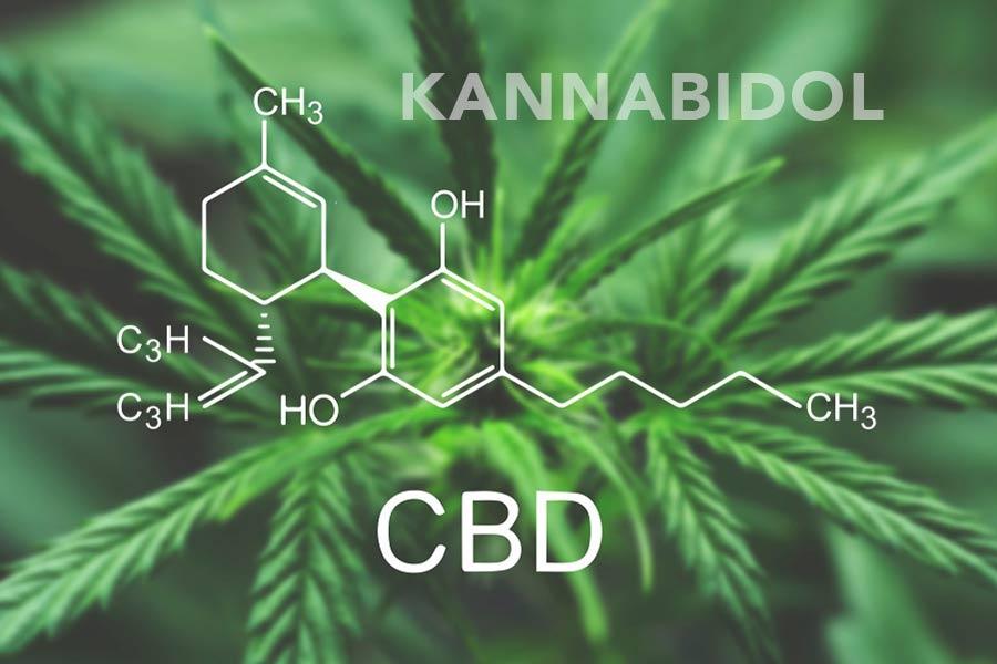cbd kannabidol i układ endoknnabinoidowy