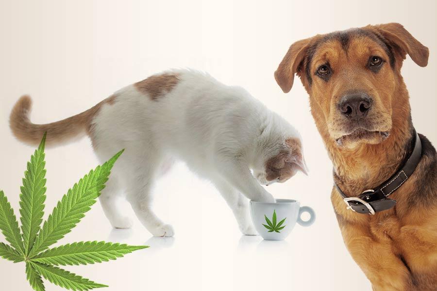 Olejek CBD dla zwierząt